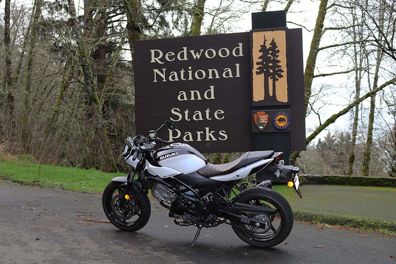 In the Shadow of Giants: SV650X Redwood Run